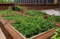Terrace Level Garden